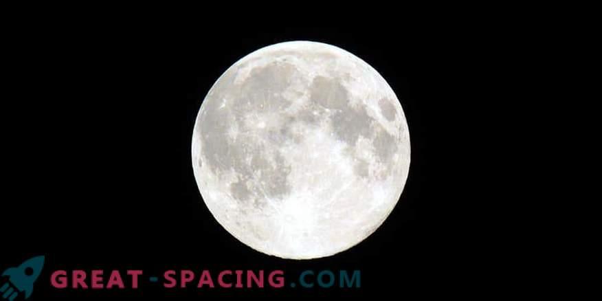 Die ersten grünen Triebe erschienen auf dem Mond!