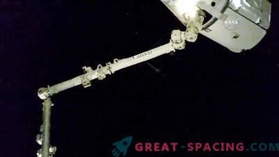 Pflanzen wurden auf der ISS gezüchtet, um in der Schwerelosigkeit zu wachsen.